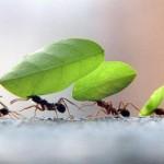 formigas-trabalhando